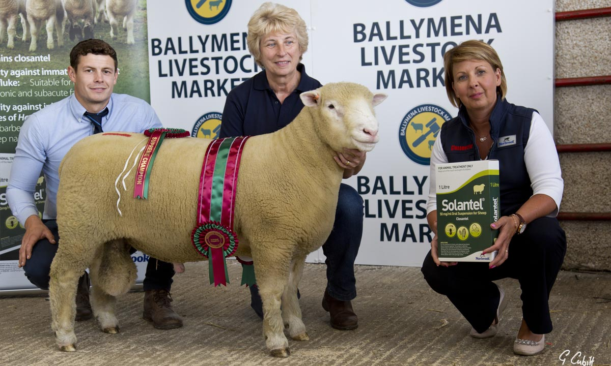 Joe judges 45th Ballymena Premier Dorset Show & Sale